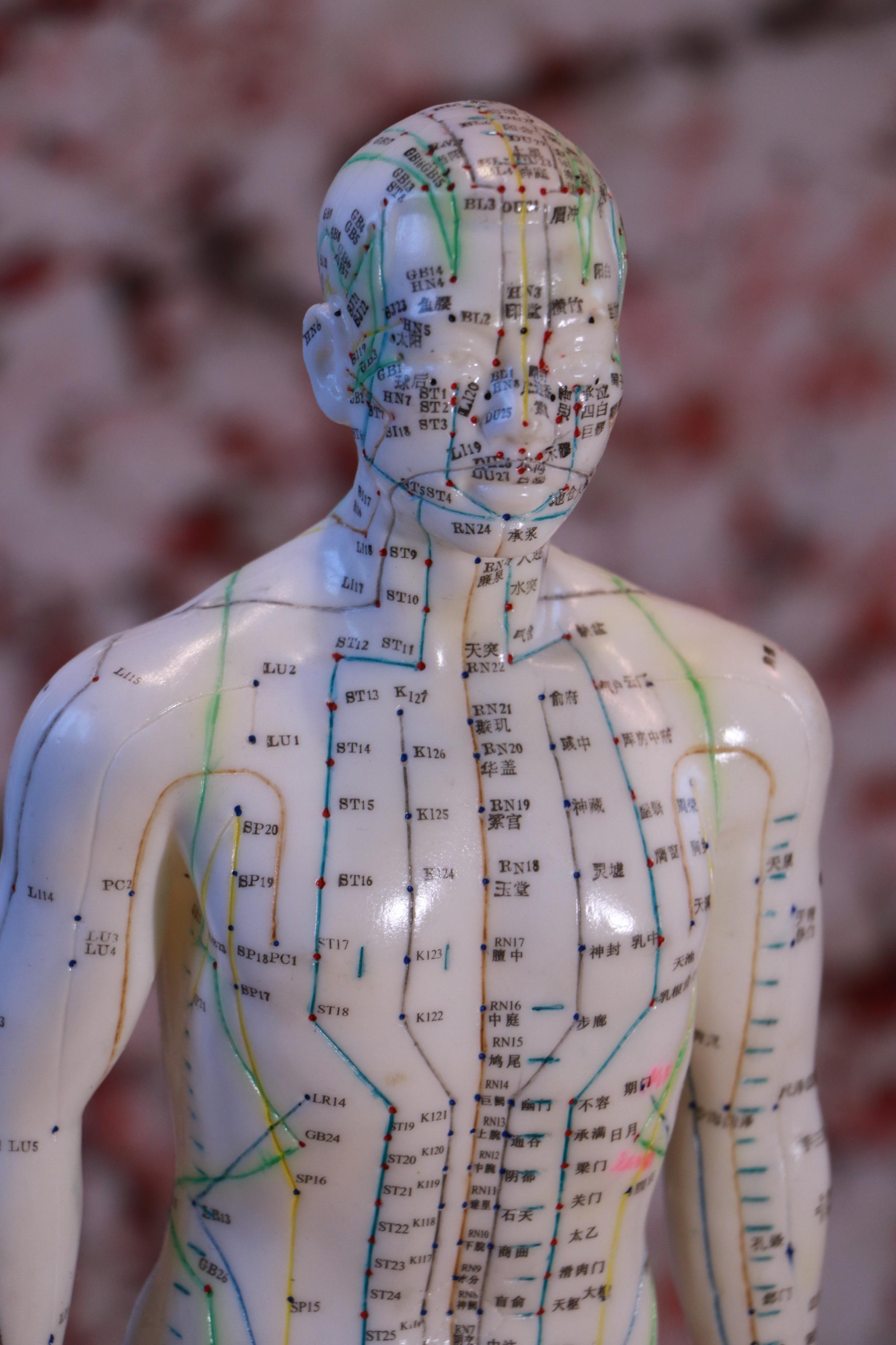 Mannequin Acupuncture Meridiens Points 2 Bien être Par Le Shiatsu Et Le Do In