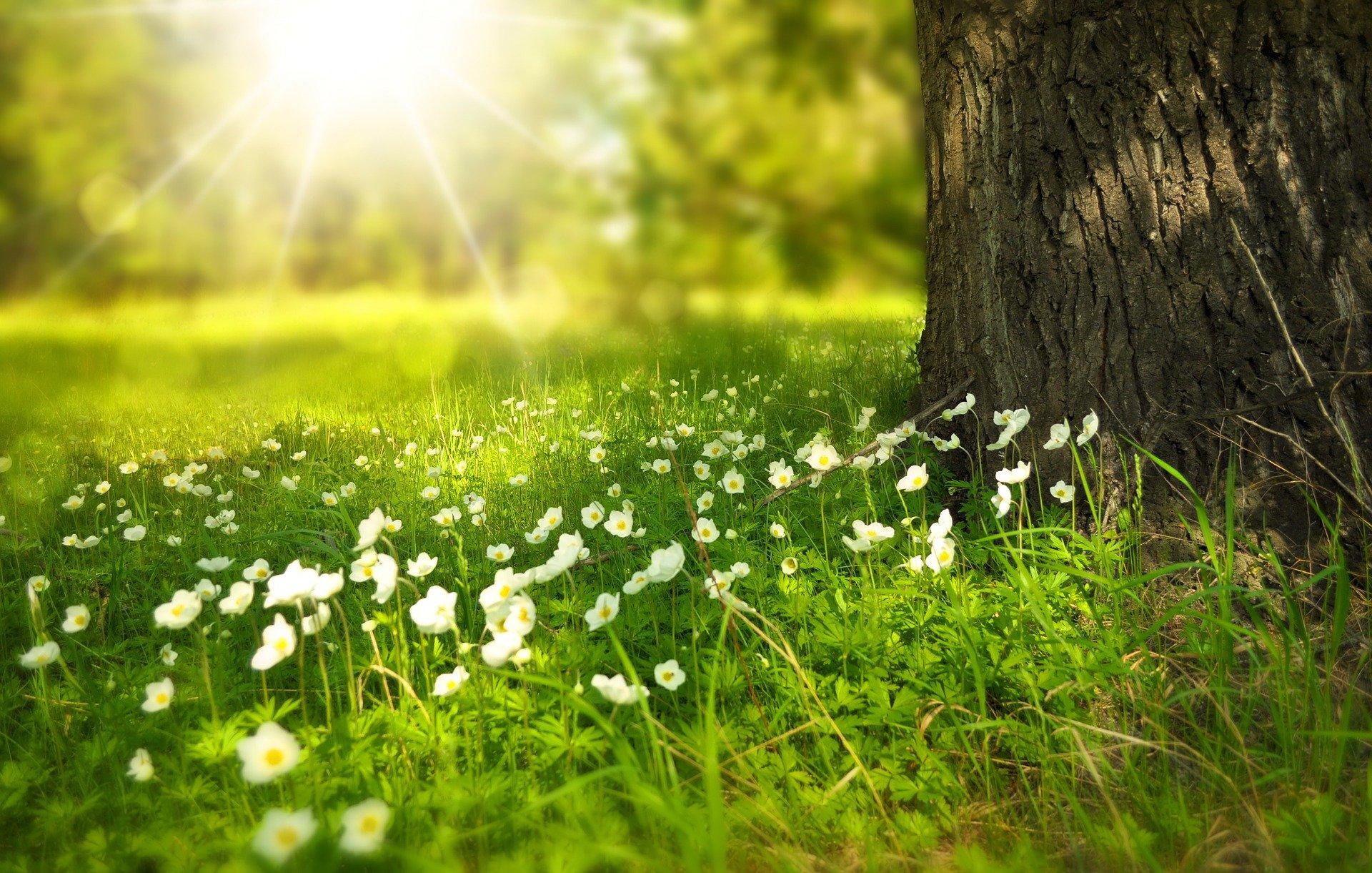 printemps-bois-shiatsu-nancy