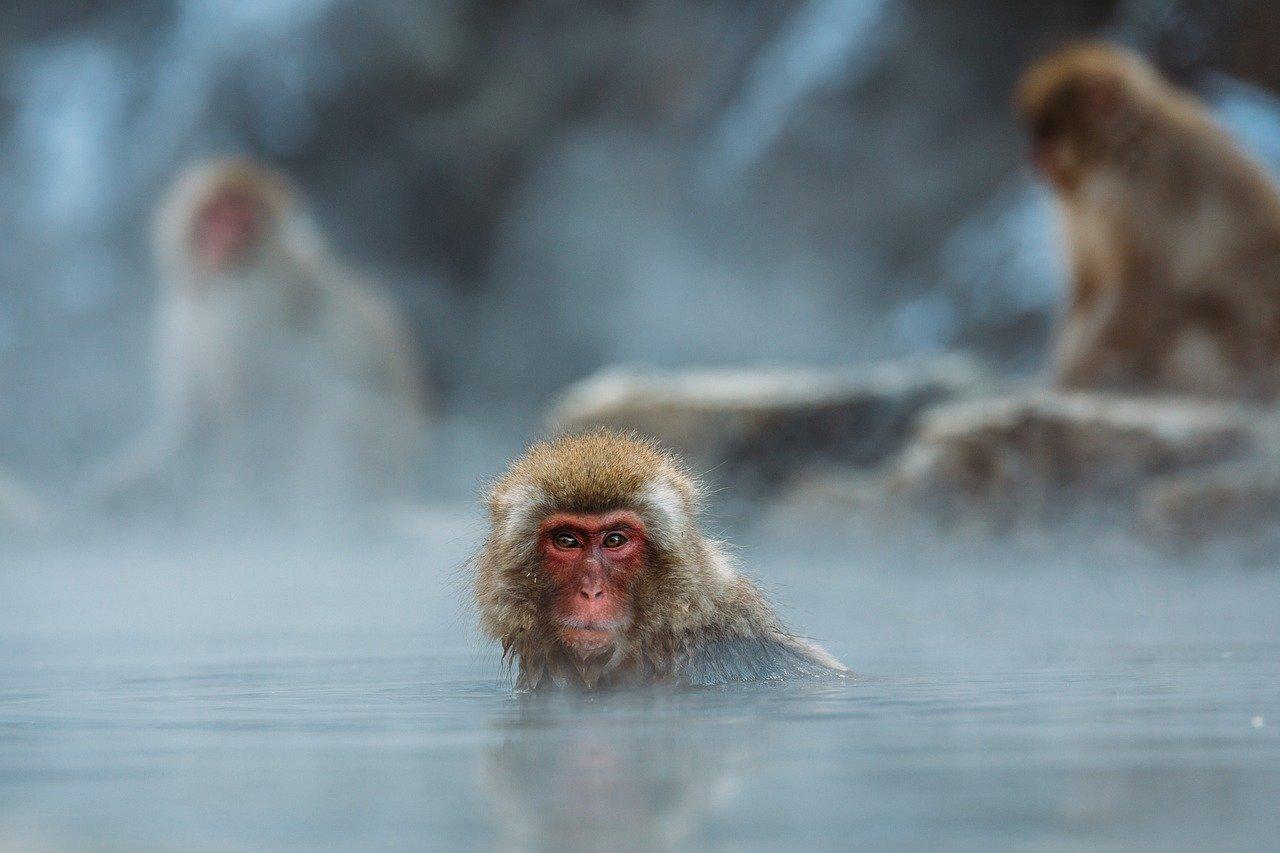 bain chaud hiver shiatsu doin nancy