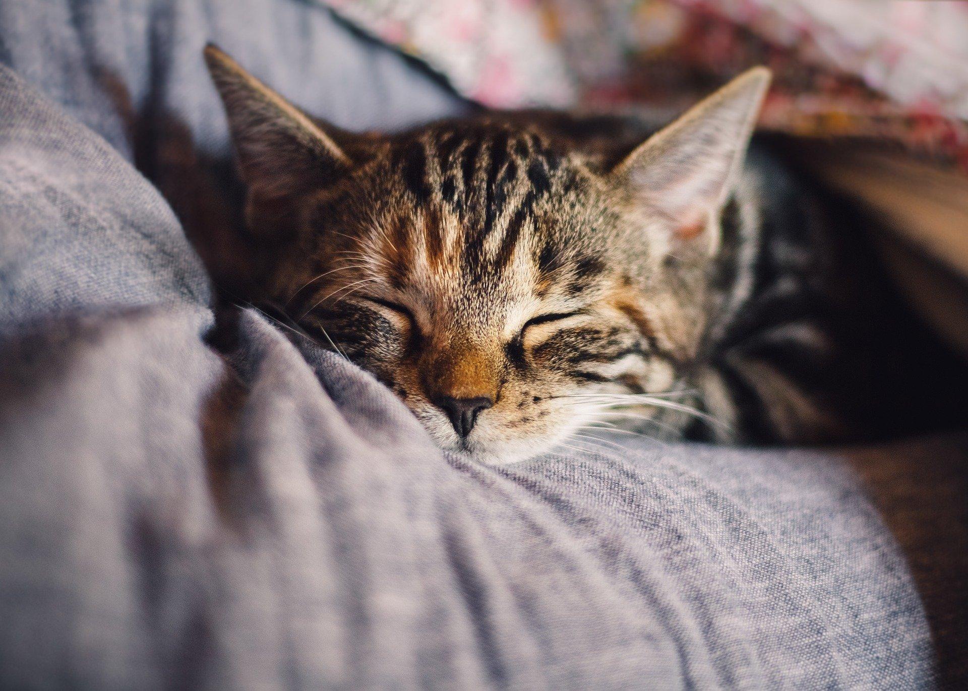 sommeil-repos-chaleur-hiver-shiatsu-doin-nancy