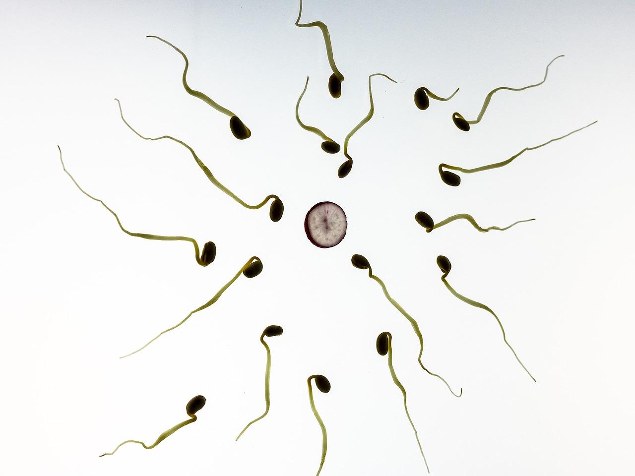 conception shiatsu maternite
